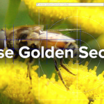 Atrise Golden Section Free Download